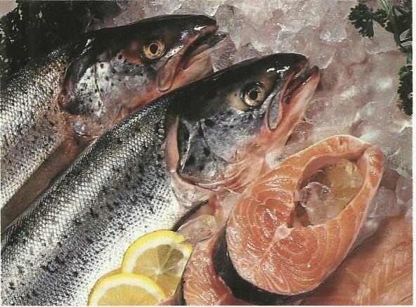 Descubra se o peixe faz bem ou mal